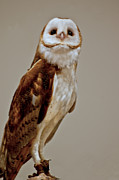 Snowy Night Art - Barn Owl of Michigan by LeeAnn McLaneGoetz McLaneGoetzStudioLLCcom