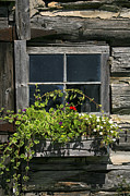 Old Barn Posters - Barn Window Poster by Timothy Johnson