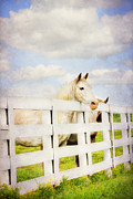 Kentucky Horse Park Framed Prints - Barn Yard Dreamer Framed Print by Darren Fisher