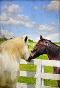 Kentucky Horse Park Framed Prints - Barn Yard Kisses Framed Print by Darren Fisher