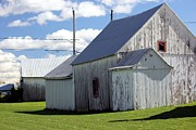 Farming Barns Posters - Barns in Quebec Poster by Sophie Vigneault