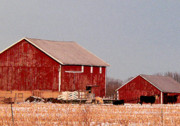 Red Barns Photo Prints - Barns in Winter Print by David Bearden