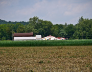 Sweet Corn Farm Prints - Barns Print by Tim  Fitzwater