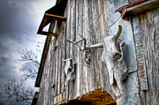 Beautiful Image Metal Prints - Barnstorm Metal Print by Pixel Perfect by Michael Moore