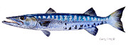Bahamas Painting Metal Prints - Barracuda Metal Print by Carey Chen