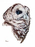 Pencil Drawing Posters - Barred Owl Poster by Brent Ander