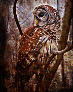 Owl Digital Art Posters - Barred Owl In Hiding Poster by J Larry Walker