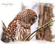 Owl Digital Art Posters - Barred Owl In Morning Prayer Poster by J Larry Walker