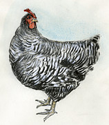 Rock Drawing Drawings Posters - Barred Rock Chicken Poster by Chris Pendleton