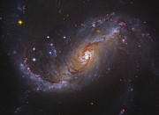 Dorado Photo Posters - Barred Spiral Galaxy Ngc 1672 In Dorado Poster by Robert Gendler