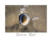 Beach Art Posters - Barrier Reef Poster by Peter Tellone
