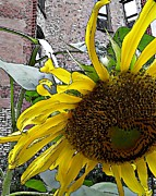 Barrio Framed Prints - Barrio Sunflower 3 Framed Print by Sarah Loft