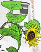 Barrio Framed Prints - Barrio Sunflower Framed Print by Sarah Loft