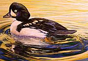 Goldeneye Paintings - Barrows Goldeneye by Shari Erickson