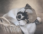Sleeping Dog Drawings Prints - Basket Case Print by Albert Casson