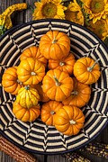 Baskets Photos - Basket full of small pumpkins by Garry Gay