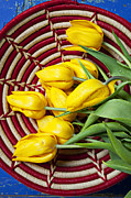 Baskets Photo Framed Prints - Basket full of tulips Framed Print by Garry Gay