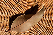 Brown Leaf Prints - Basket Of Brown Print by Dan Holm