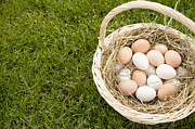 Wicker Basket Prints - Basket of Eggs in the Grass Print by Shannon Fagan