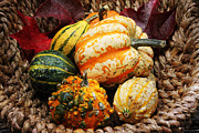 Jutta Pusl Prints - Basket of Pumpkins Print by Jutta Maria Pusl