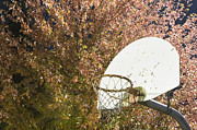 Backboard Prints - Basketball Hoop Print by Andersen Ross