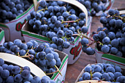 Healthy-lifestyle Framed Prints - Baskets Of Grapes Framed Print by Mary Smyth