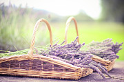 Basket Prints - Baskets Of Lavender Print by Sasha Bell