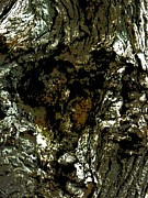 Bass Digital Art - Bass Lake Bark by Beth Akerman