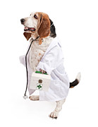 Standing Photo Framed Prints - Basset Hound Dog Dressed as a Veterinarian Framed Print by Susan  Schmitz