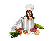 Potatoes Posters - Basset Hound Dog in Big Cooking Pot Poster by Susan  Schmitz