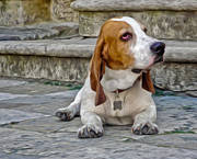 Basset Hound Photos - Basset Hound by Gregory Dyer