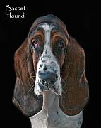 Akc Framed Prints - Basset Hound Framed Print by Larry Linton
