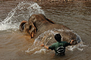 At Work Metal Prints - Bath Time In Laos Metal Print by Bob Christopher