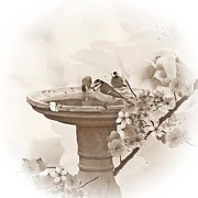 Cherry Blossom Prints - Bath time Print by Sharon Lisa Clarke