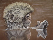 Bathing Pastels - Bathing Monkey by Kim Shayler