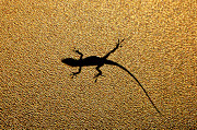 See Photos - Bathroom Window Lizard by Bill Adams - MomentsNow.com
