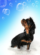Domestic Pet Portrait Prints - Bathtime fun Print by Jane Rix