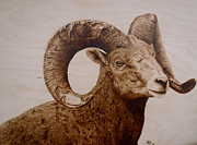 Animal Art Pyrography Prints - Battle Scarred Big Horn Ram Print by Adam Owen