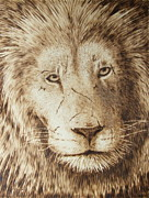 Lion Pyrography - Battle Wounds by Heather Ward