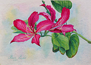 Small Paintings - Bauhinia study by Elena Roche