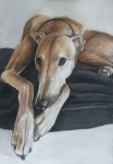 Pastel Dog Paintings - Bauregard by Charlotte Yealey