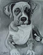 Baxter Print by Kim Shayler