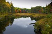 Baxter Posters - Baxter State Park Small Pond in Autumn Maine Poster by Brendan Reals