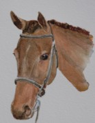 Watercolor. Equine. Bridle Prints - Bay Hunt Print by Gretchen Bjornson