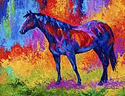 Western Framed Prints - Bay Mare II Framed Print by Marion Rose