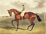 Thoroughbred Paintings - Bay Middleton Winner of the Derby in 1836 by John Frederick Herring Snr