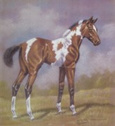 Dorothy Coatsworth Metal Prints - Bay Paint Foal Metal Print by Dorothy Coatsworth