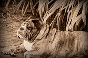 Brindle Digital Art Prints - Baydie Print by Jeanette C Landstrom