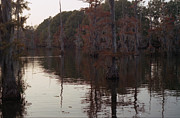 Bourke White Prints - Bayou Desiard Print by Doug  Duffey