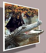 Photography By Govan Framed Prints - Bayou Gator Framed Print by Andrew Govan Dantzler
